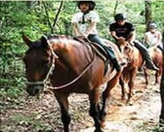 Horseback Riding Georgia Mountains