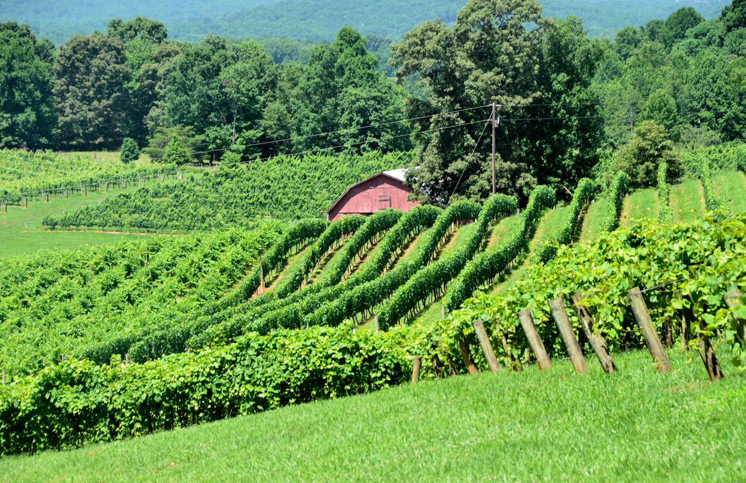10 Of The Most Beautiful North Georgia Vineyards