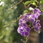 purple flower hanging in garden
