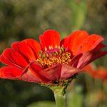 read flower blooming in garden