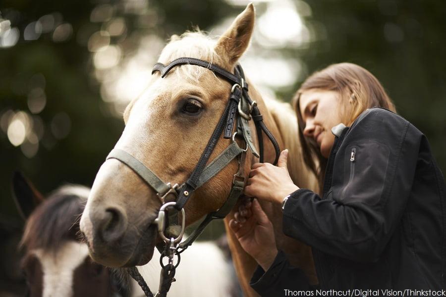 North Georgia Horseback Riding