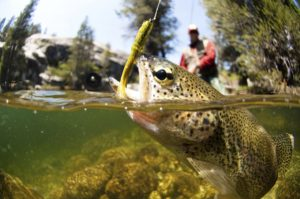 Man catching a trout during Soque River fly fishing