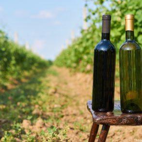 Enjoying the Unicoi Wine Trail