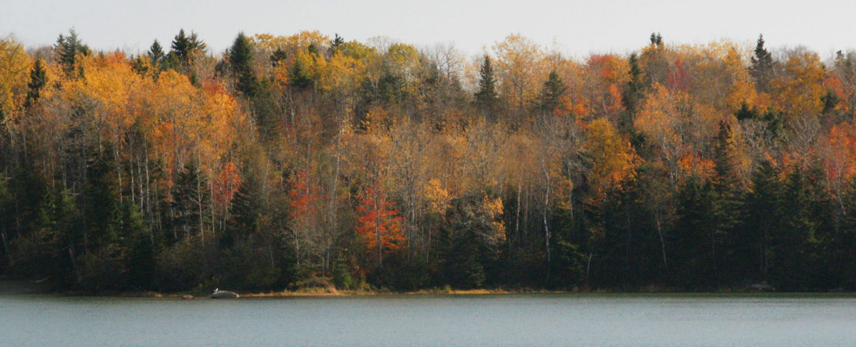 fall trees alongside the water
