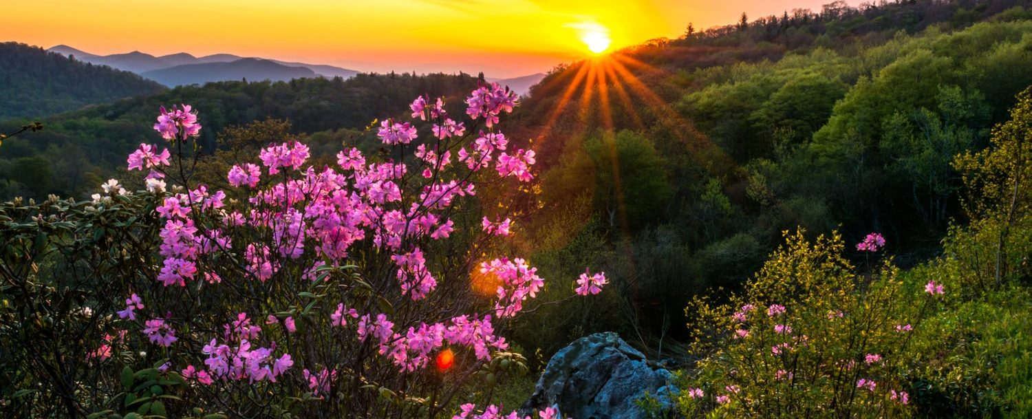 pink wildflowers on mountain with sunset